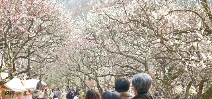 世界一美しい半島伊豆に春が来る