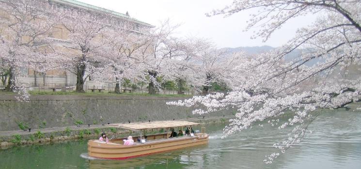 京都大阪信州伊豆へ春花紀行