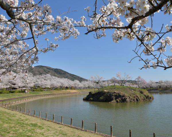 北条大池と桜