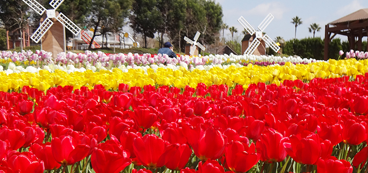 春満開のリゾート兵庫県淡路島