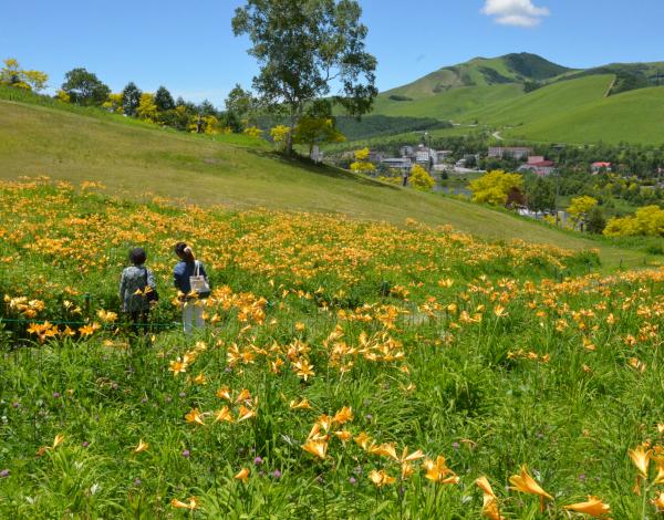黄金アカシアの丘