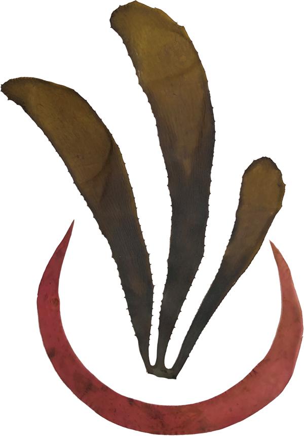 海藻おしばロゴ